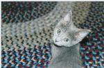 kittenovershoulder