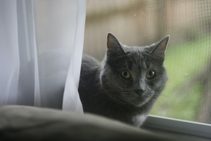 windowkitty