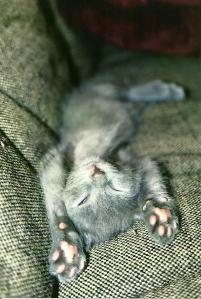 smeagolbabysleep
