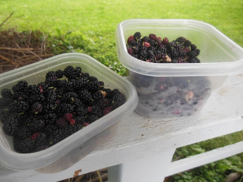 Mulberry foraging containers