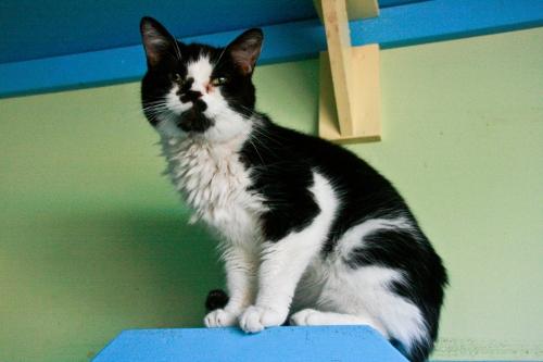 caturday1