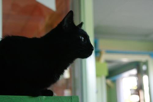 caturday10