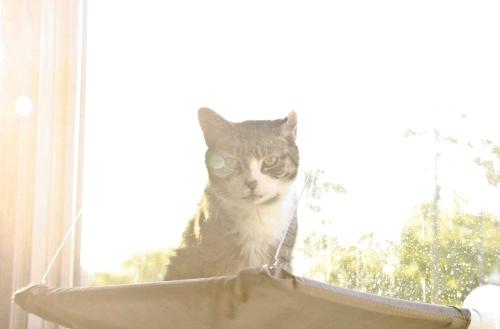 caturday13
