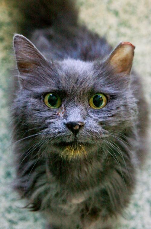 caturday16