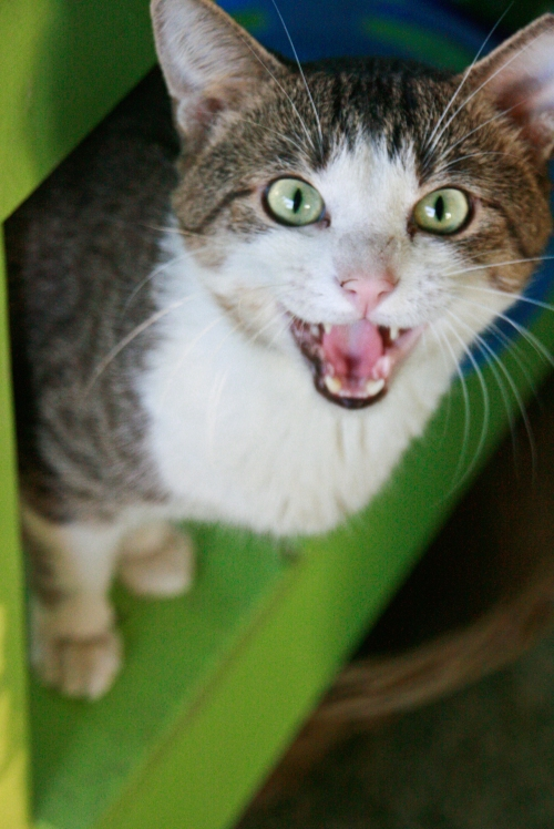 caturday5