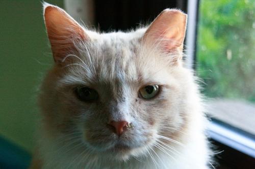 caturday6