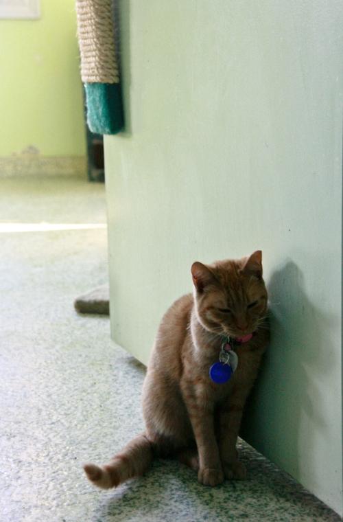 caturday9